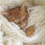 Kitten Cuddled Up With Yarn