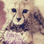 Baby Cheetah with Yarn