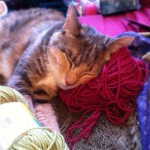 Cat Sleeping on a Yarn Ball