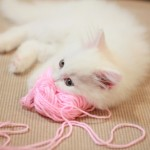 White Kitten Sleeping on a Pink Yarn Ball